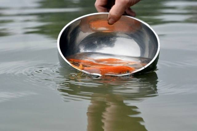 Phóng sinh con cá chép